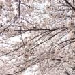 花見でハートマッサージ