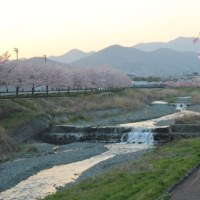 篠窪(しのくぼ)の隣町 風の吊り橋(神奈川県立秦野戸川公園)の四季写真