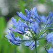 住宅地と白山神社公園をつなぐような花壇の花々