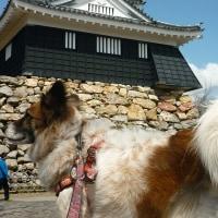 旅のめぐちゃん―浜松城へ―(めぐぱぱ)