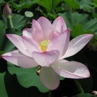 仏様の隣には、やっぱり蓮の花が・・・(^m^)