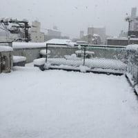 ねこのトラちゃんと雪!