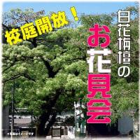 シロバナセンダン(白花栴檀)スズダケ(皿ヶ峰 2017年5月28日)