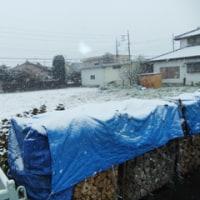 初雪 こんな感じ