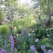 夏の庭の様子です。
