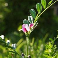 今日の手賀沼遠望と小さな花たち。