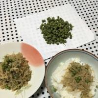 ★実山椒を使ったおススメ常備菜、シラスの山椒煮★