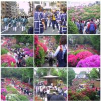 20060429根津神社