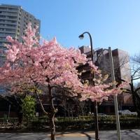 春が・・・来る