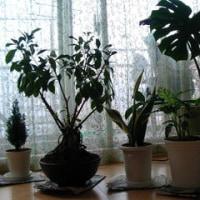 室内緑化計画2