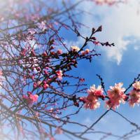 桜の空に。