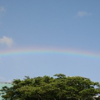 ���ϥ磻����SASHIMI�椫�鸫�����Τϡġ�