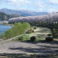 東北2 角館の桜