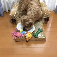 ごんべい10歳!!