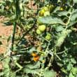 白百合と夏の庭 👒 2017年7月15日
