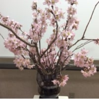 桜の開花熊谷でも