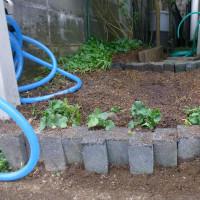 「花壇」の作り直し・・・土木作業は疲れるなぁ・・・・!!!