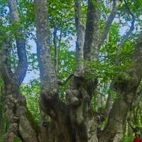 樹木が主役の写真ー17