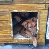 遂に 愛犬トレールが ジイジと呼ぶように・・・・・