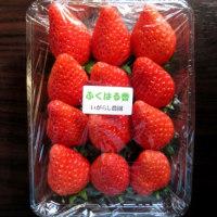 福島の叔母から届いたイチゴ「ふくはる香」