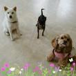 7月10日(月)…プアララDogナーサリー(犬の保育園)
