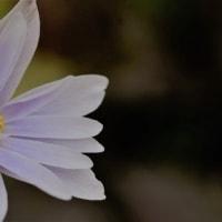 庭の淡紫色と黄色
