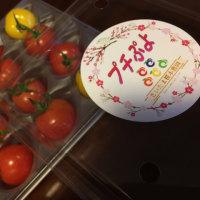 新しいプチトマト