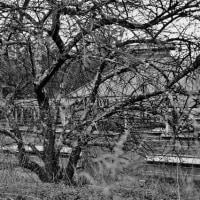 キャンプ場の木