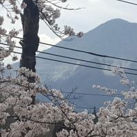 芝桜の丘[羊山公園] ★速報です