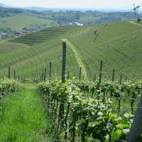 生の味に合う花崗岩ワイン