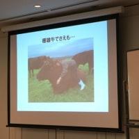馬ではなく、牛に乗る。