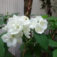 昨日見た花