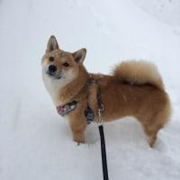 何度目かの大雪