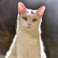 「庭の闖入者」 いわき 自宅にて撮影! 猫