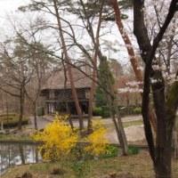 あづま運動公園の桜並木