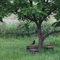5月27日、畑も花木もキジも生き生き~♪