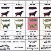 大正動物医療センターニュースレター 【2015年12月号】