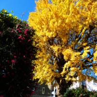 『季節の色』 神明町
