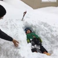 新春穴掘り