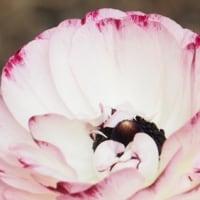 桜開花・・・・そして庭では