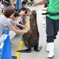 仙台うみの杜水族館。