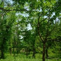 今日のクアの道。森林浴できそうです+。:.゚٩(๑>◡<๑)۶:.。+゚