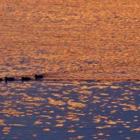 夕陽の海 (賢島)