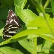 原村の蝶他 7月20日