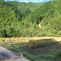 稲刈りの時期