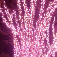 ピンクのイルミ♪