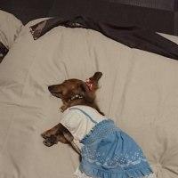 愛犬のお宿に行ってきました。