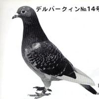 マルセーユJr孫、東日本CH1000K16,856羽中総合3位