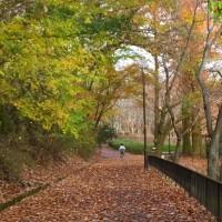 晩秋の宝ヶ池、まだ山の紅葉がきれい。
