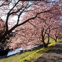 <02/13> やっと春らしい一日に